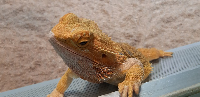 Can Bearded Dragons Eat Leeks