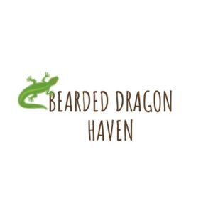 Bearded Dragon Haven